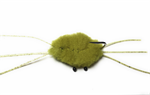 Bauers Crab in Olive